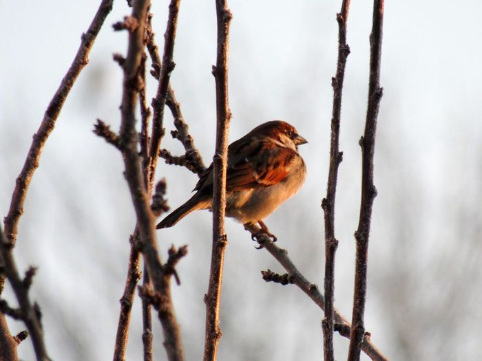 Close-up of bird perching on bare tree during winter