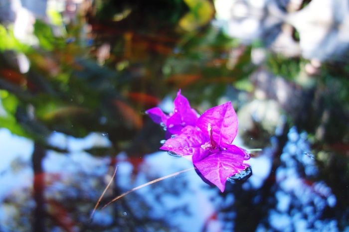 Swimming Fountain Selective Focus Reflections In The Water Afternoon Light Garden Photography Pink Blue Sky Colors Flower Flower Head Water Leaf Pink Color Autumn Multi Colored Close-up