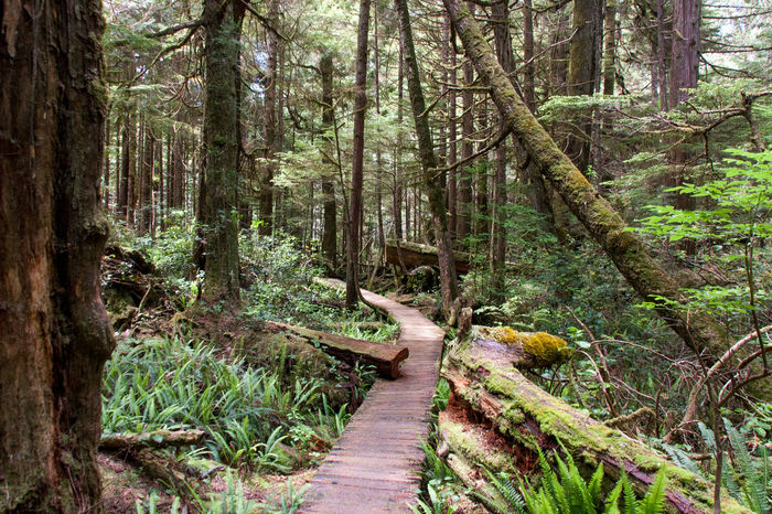 Adventure British Columbia Canada Forest Growth Long Beach Non-urban Scene Ocean Outdoors Pacific Rim Rugged Scenics The Way Forward Tofino Tranquil Scene Tranquility Tree Tree Trunk Ucluelet Vancouver Island Wild Pacific Trail Wilderness Wilderness Adventure Wildernessculture WoodLand