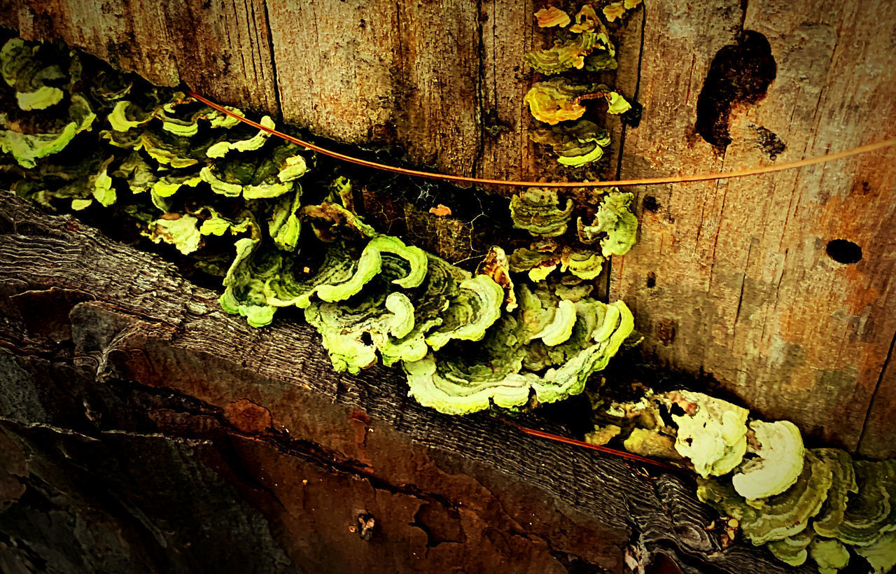 plant, growth, no people, day, plant part, tree trunk, close-up, leaf, trunk, nature, green color, outdoors, moss, wood - material, vegetable, tree, fungus, old, wall, weathered, lichen