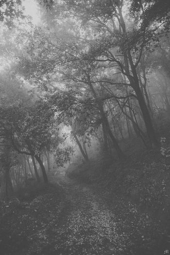 Bosque Taking Photos Blackandwhite Fotograf Dark Photograp Darkness And Ligdark