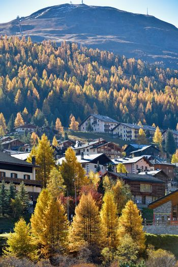 Tree Plant Architecture Autumn Built Structure Building Exterior Building Change Nature Day No People Beauty In Nature High Angle View City Growth Residential District Mountain Outdoors Scenics - Nature House