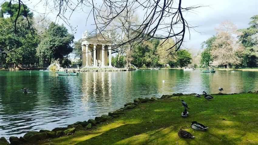 Roma Romalovers Italy🇮🇹 Italy❤️ Capital Villaborghese Parcocosini Turistas Turistapersempre Nature Wild Vacation Time ♡ Outdoors Water Tree Lake Sun&fun The Great Outdoors - 2017 EyeEm Awards