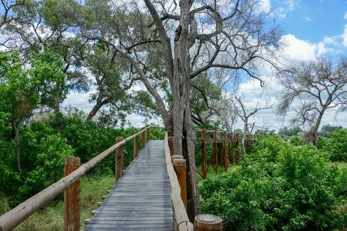 Mapungubwe National Park in Limpopo, South Africa Mapungubwe Mapungubwe National Park National Park Nature South Africa Wooden Bridge Africa Bridge Limpopo Walking Safari