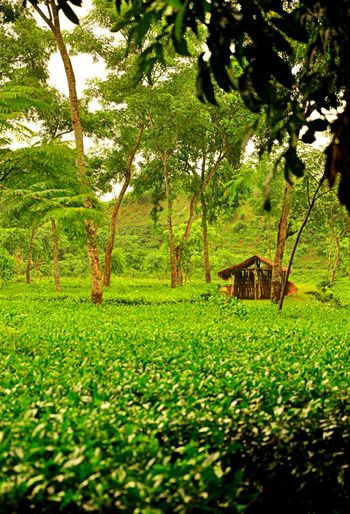 Lonely house, colorfull dreams around! Check This Out Colors Colors_around Landscape_photography Natural Bangladesh Beautiful Bangladesh Taking Photos From My Point Of View Landscape View