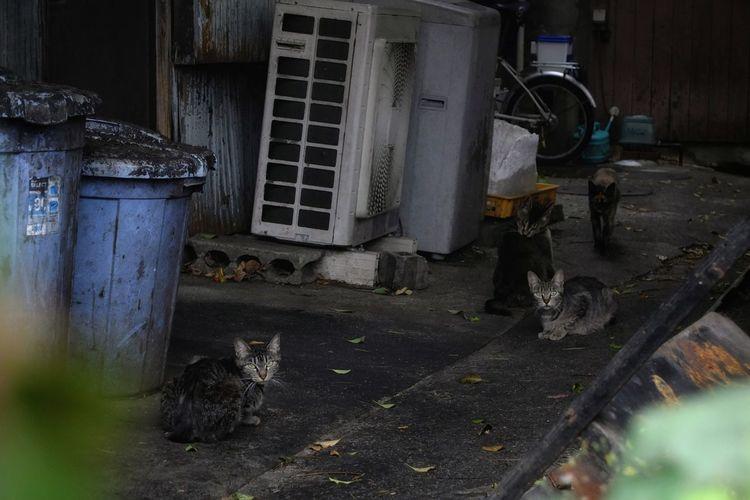 野良猫 野良貓 Wild Life Stray Cats Alley Cat AlleyShots Street Photography Cat Watching Animal Watching Animal Photography Animals In The Wild Looking At Camera Snapshots Of Life EyeEm Cats Lover From My Point Of View Capture The Moment