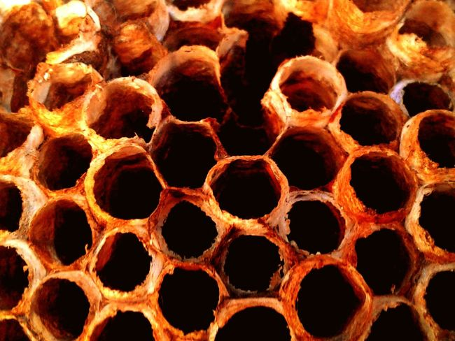 Honeycomb detail of a wasp nest. No People Honeycomb Outdoors Close-up Textured  Full Frame Beauty In Nature Fragility Day Backgrounds Nest Wasps Nest Closeup In Nature EyeEmNewHere The Week On EyeEm