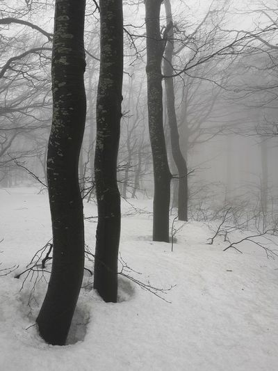 Moody moments Weather Moody Weather Moody Nature Moody Atmosphere Foggy Weather Foggy Landscape Misty Landscape Mistic Place Follow4follow Followme Travel Destinations Copy Space Nopeple Huwaeip20 Huaweiphotography Wide Angle Backgrounds Forest WoodLand Wintertime Winterscapes Winter Winter Low Section Human Leg Standing Shadow Close-up