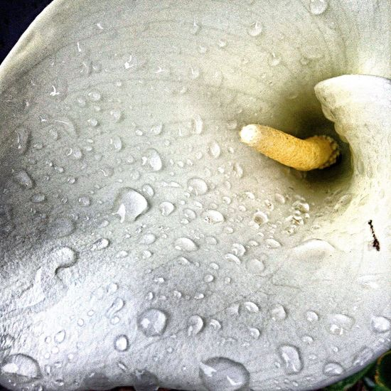 Show me a garden thats bursting into life. Flower Raindrops Today This Morning