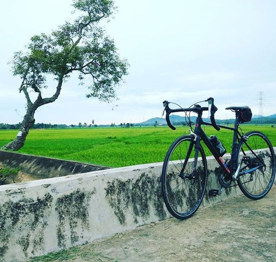 Helios C4 Roadbikes Bikingrepost Vscocam Vscoaceh Polygon Aceh Nature Gogreen