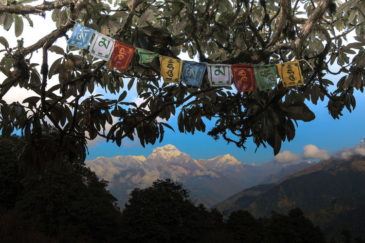 near to the Annapurna - Vicino all'Annapurna Annapurna Annapurna Conservation Area Himalayas Montagne Nepal Trekking Annapurnacircuit Bandiera Flag Nature Outdoors Sky Tree Wildlife