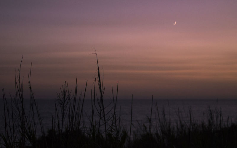 Sky Tranquility Scenics - Nature Sunset No People Beauty In Nature Nature Plant Tranquil Scene Silhouette Grass Water Sea Dusk Land Outdoors Environment Moon Cloud - Sky Twilight Marram Grass