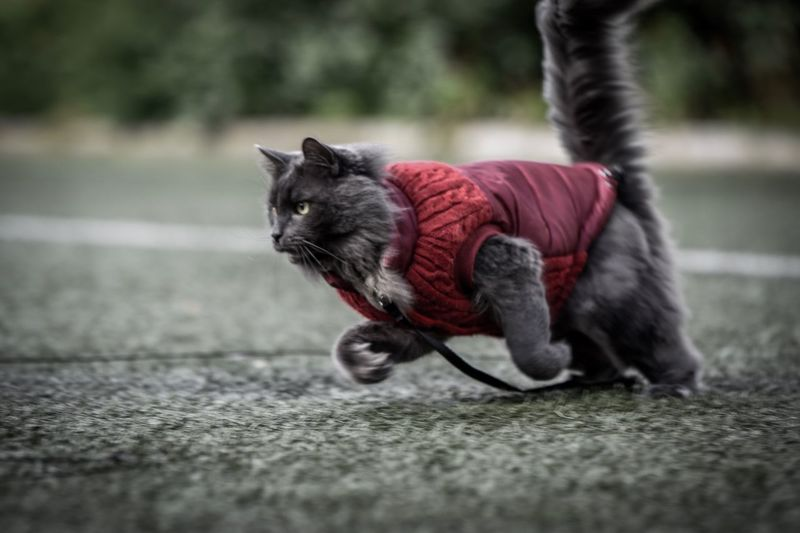 Domestic Cat Pets One Animal Animal Themes Domestic Animals Mammal Feline No People Outdoors Day Full Length Close-up