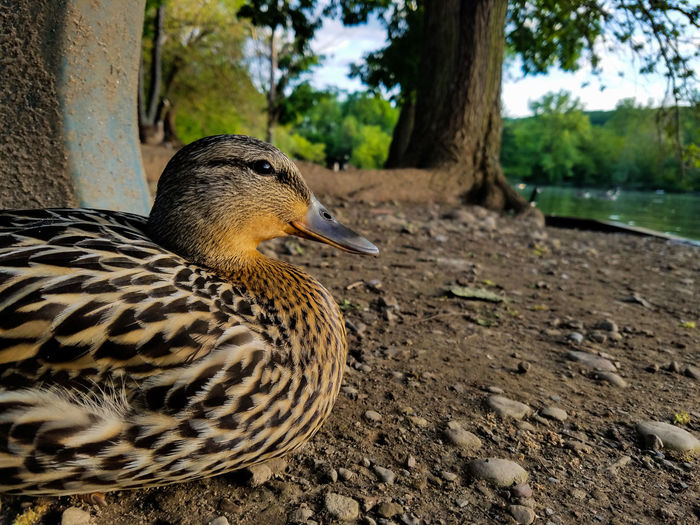 Animals In The Wild Animal Wildlife Animal Themes Nature Bird One Animal Day No People Outdoors Close-up Samsung Galaxy S7 Animals In The Wild Live For The Story The Great Outdoors - 2017 EyeEm Awards Check This Out EyeEm Nature Lover Beauty EyeEm