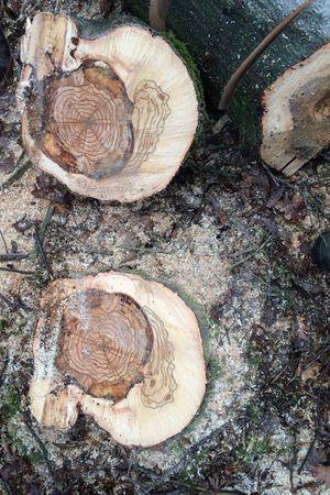 Showcase: February Nature Mothernature Taking Photos Wood Woods Trhees
