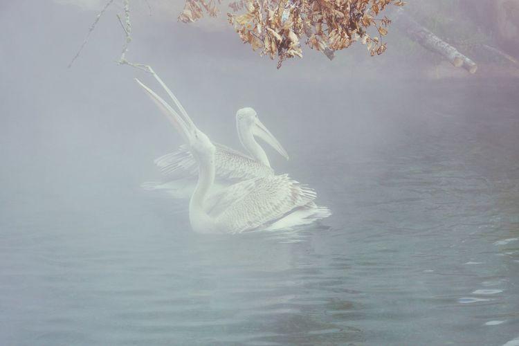 Oiseaux dans la brume. ZooBeauval