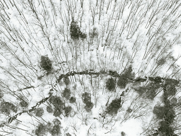 Low angle view of bare trees on snow covered land