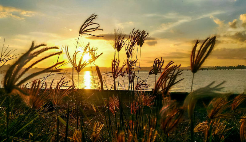 I never met a sunset i didn't fall in live with🌅❤. Nature Sunset Beauty In Nature Outdoors Tranquil Scene Beautiful Gorgeous Lifestyles Scenery LoveNature Ocean Sea Sky Clouds Beach Break The Mold