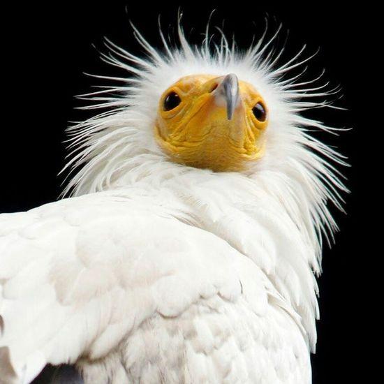 Bird Birdofprey White Whitebird Hairybird Wildlife Animal Lifeasiseeit Travelling Johnnelson