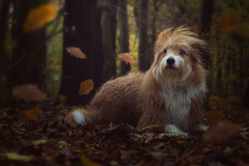 One Animal Forest Animal Outdoors Mammal Nature Autumn Animal Wildlife No People Tree Domestic Animals Animal Themes Day Pets Portrait Cute Leafs Windy Stormy Dog