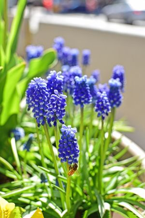 Bee Flower Flowering Plant Plant Purple Beauty In Nature Freshness Vulnerability  Close-up Fragility Nature Growth Flower Head Inflorescence Plant Part Blue Focus On Foreground