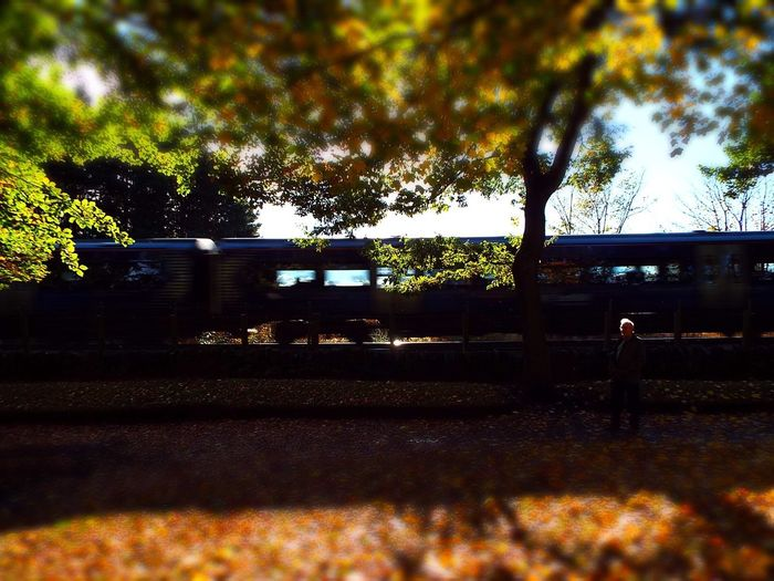 Trains Tree Trains Autumn Colors Autumn Leaves Broughty Ferry Scotland Today Traintracks Scotrail Park Beauty In Nature EyeEm Best Shots EyeEm Gallery Sunbeam East Coast Vibrant Color Golden Leavefall Autumun Family Time Weather Dundee, Uk Dundee Trees