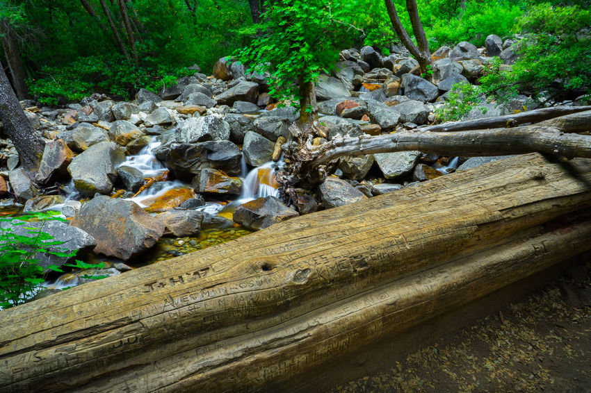 Giant Forest Log Defaced With Graffiti and Initials Carved Into It - Bridalveil Creek, Yosemite California Camping Creek Destruction Graffiti Hikes Hiking Names Recreation  Rocky Sierra Yosemite Yosemite National Park Attractions Bridalveil Creek Carving - Craft Product Defaced Defacing Nature Family Vacation Forest Initials Log National Parks Sierra Nevada Vacation
