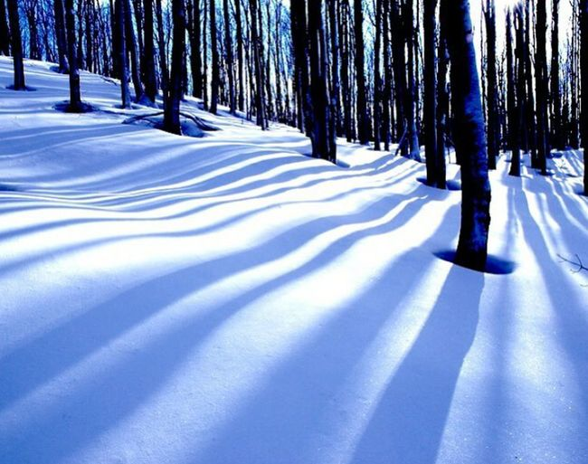 Tb TBT  Snow Winter Cold Temperature Nature Tree Sunlight Beauty In Nature No People Day Goodphoto Nature Verynice Photography Very Good Nice Pic Veryvery Blue Winter Snow ❄ Tree