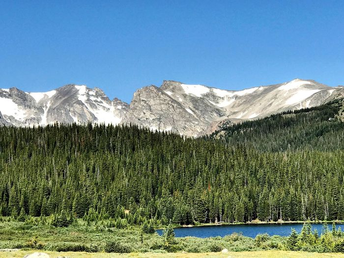 Brainard Lake Mountain Beauty In Nature Nature Mountain Range Tranquil Scene Clear Sky Pine Tree Landscape Outdoors Colorado Life Colorado Outdoor Life Colorado Photography Coloradophotographer Colorado Mountians Coloradogram Lake Brainard Lake