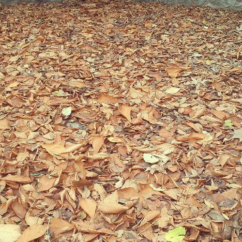 Ömrümün dökülen yapraklarını hatırlatan kare Ankara