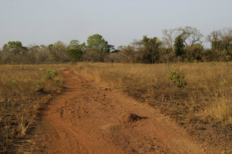 On the road from Quebo via Ché Ché to Gabu in Guinea-Bissau. Guinea Guinea-Bissau Republic Of Guinea-Bissau República Da Guiné-Bissau Road Road Less Travelled West Africa Africa African Road Day Landscape No People Outdoors Scenics