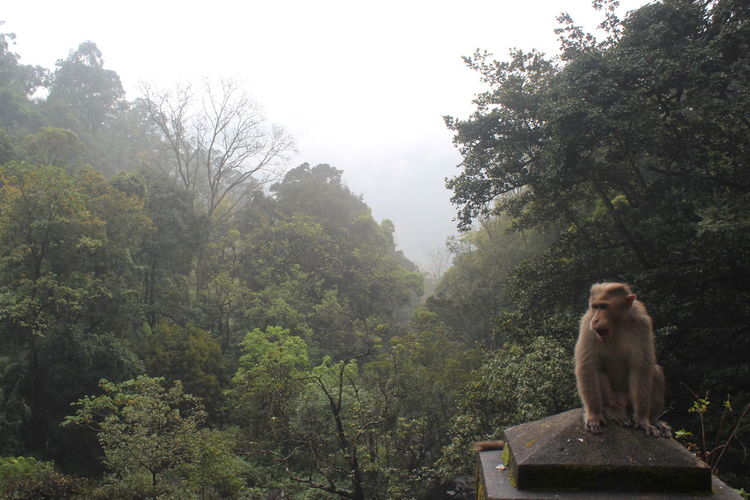 Monkey on stone structure against trees