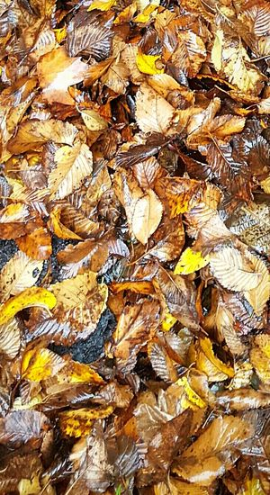 Rain on autumn leaves Rain On Autumn Leaves Autumn🍁🍁🍁 Autumn Colors