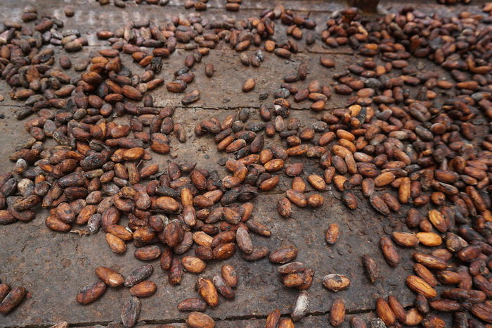 Cacao Beans Chocolate Chocolate Making Cacao Cacao Beans Drying Dry Cacao Beans Organic Farming Organic Food Raw Cacao Beans