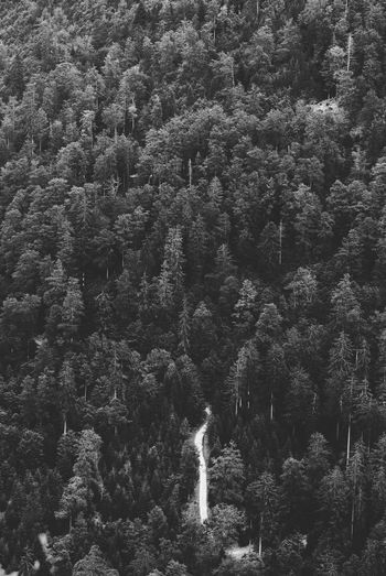 Trail in a dark forest Dark EyeEmNewHere Road Beauty In Nature Black And White Blackandwhite Bnw Bnw_collection Day Environment Forest Idyllic Land Nature No People Non-urban Scene Outdoors Pine Tree Pine Woodland Scenics - Nature Trail Tranquil Scene Tree Way WoodLand The Great Outdoors - 2018 EyeEm Awards