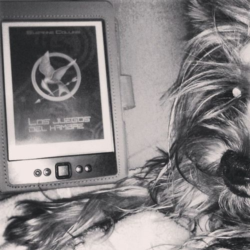 Relax. LosJuegosdelhambre Thehungergames Katniss Everdeen relax winter yorkshire nala agustito