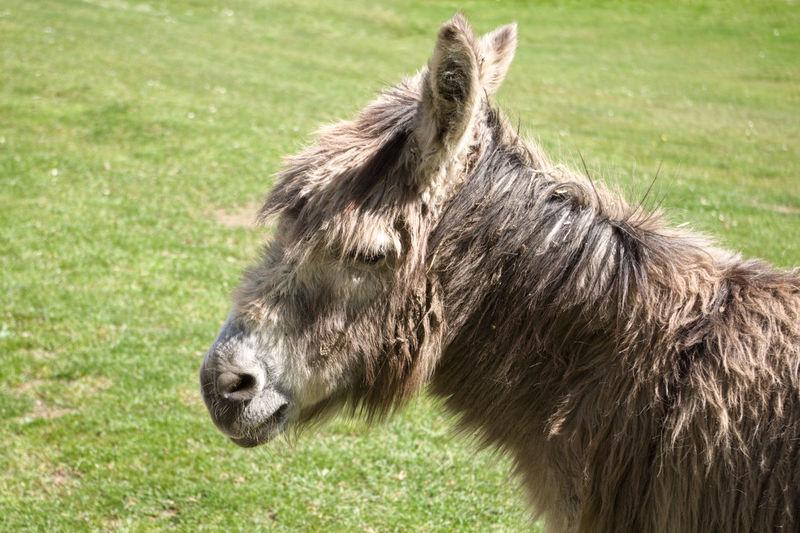 donkey on a