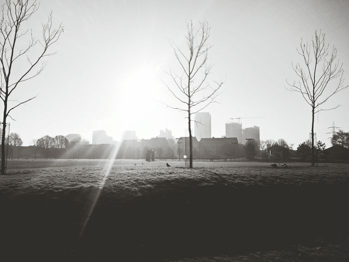 A town called obsolete Tree Morning Fog Day Nature Outdoors No People Beauty In Nature Sky Building Exterior Window Weather Sunlight East London Nature City Beauty In Nature Condensation Green Grass Freeze Ice London Field Tranquility Cityscape