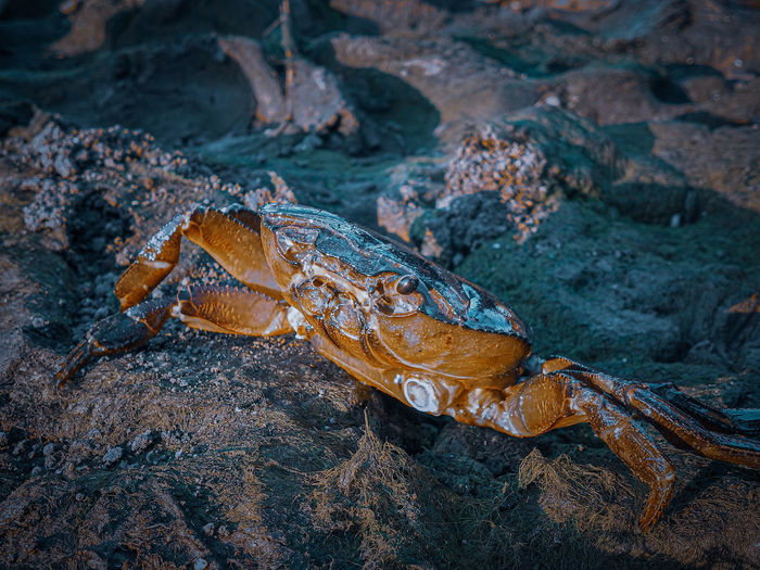 High angle view of crabe on rock