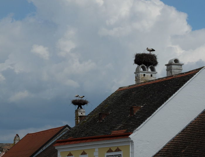 srork´s nest Animal Themes Architecture Bird Building Exterior Built Structure Day Low Angle View No People Outdoors Roof Roof Tile Rust Austri Sky Stork Stork´s Nest Tiled Roof