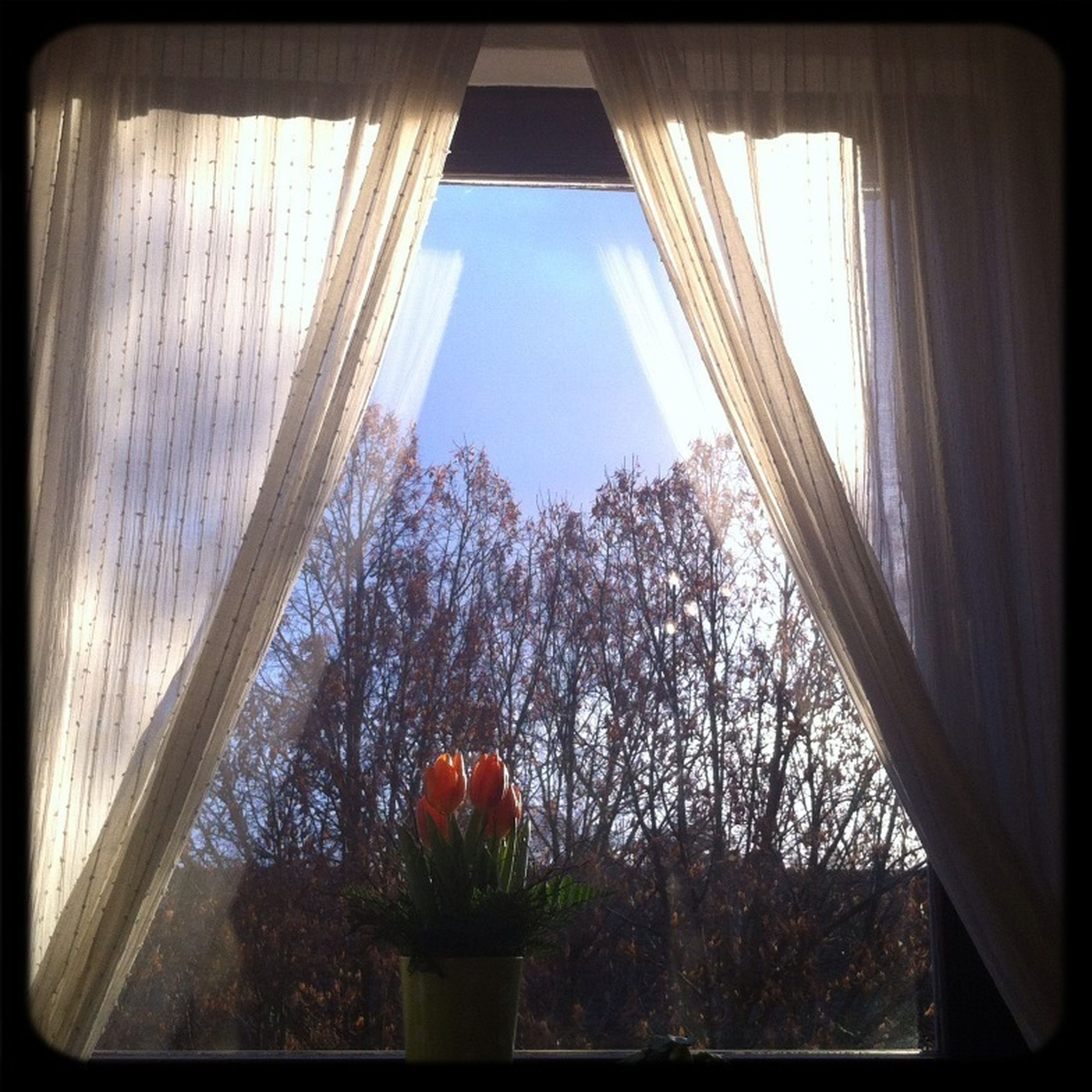 window, indoors, glass - material, transparent, tree, home interior, window sill, growth, plant, curtain, potted plant, house, sunlight, glass, built structure, looking through window, day, architecture, no people, auto post production filter