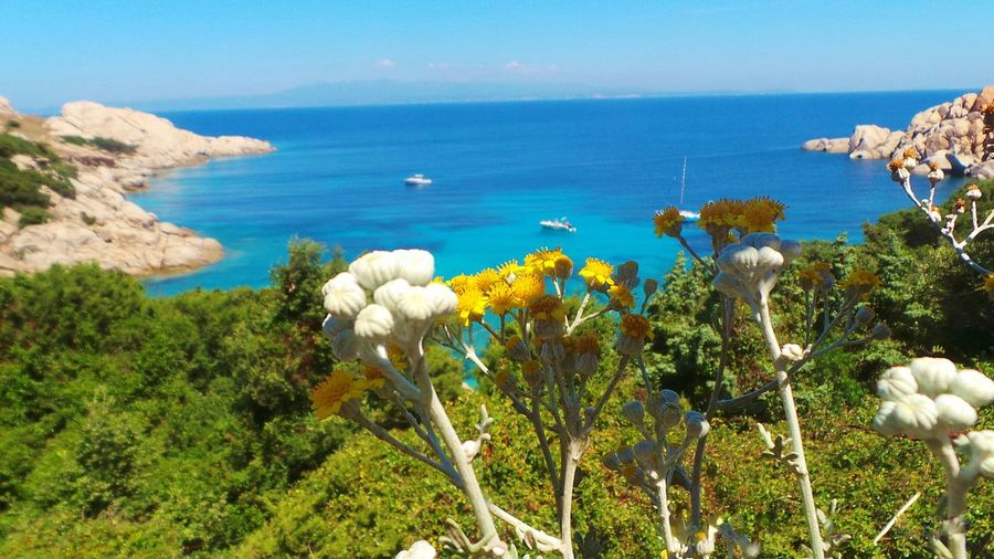 Lemon By Motorola Flowers Wild Flowers Yellow Flowers Sea Sardinia Sardegna ♡ Holiday POV Summer Views Protecting Where We Play Blue Wave Nature's Diversities The Essence Of Summer Fine Art Photography