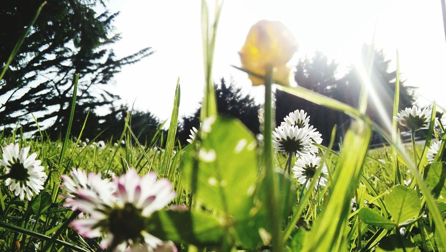 Flowers, Grass In Sunny Day