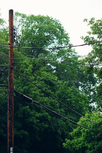 In The Rain. Overcast Shooting In The Rain TreePorn Vscocam VSCO Goexplore EyeEm EyeEmBestPics Vscogrid Vscohub