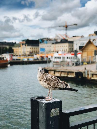 Bird in