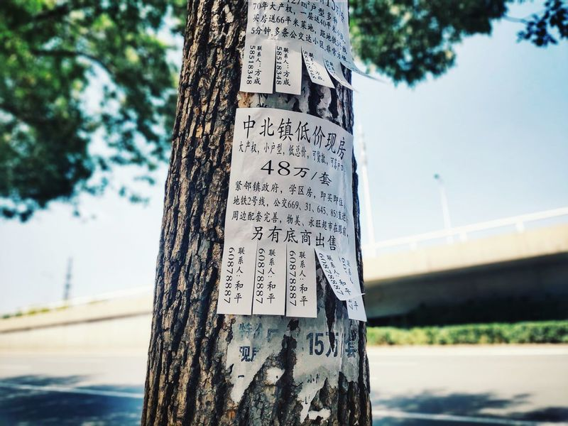 Xiaomi Mi8 Se Tianjin Tianjin University Tree Street Tree Communication Text Symbol Sky Close-up Carving - Craft Product Information Signboard Information Sign Sign Written Message Capital Letter The Street Photographer - 2018 EyeEm Awards