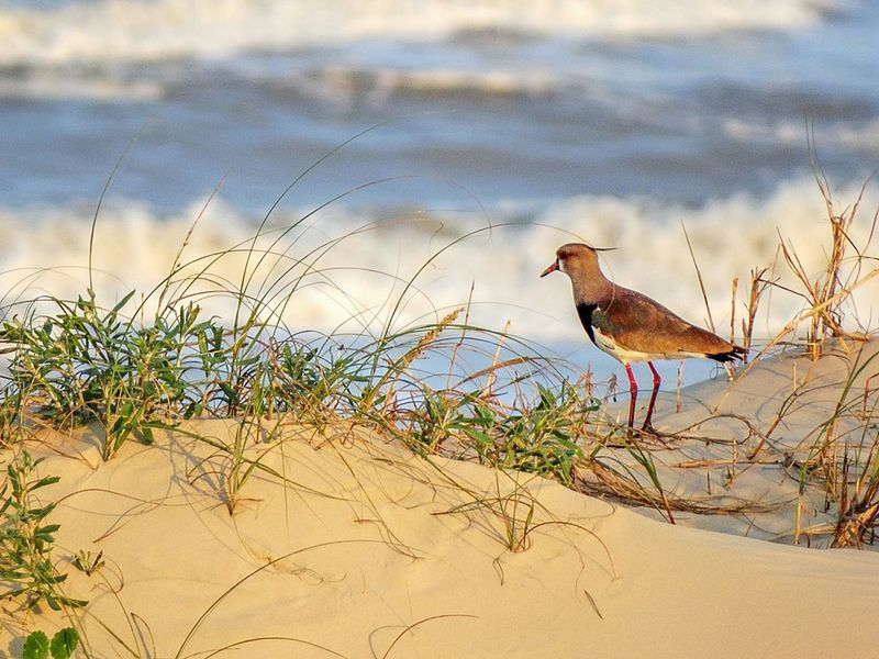 Bird Sand Beach Outdoors Day Animals In The Wild Animal Themes Full Length Nature Oceanlife Colorful Nature Ocean Colorful Animal Sea Nature Water Sunset Sun Beauty In Nature Landscape Sunrise Colors Animal Wather Scenics Ocean Waves The Great Outdoors - 2018 EyeEm Awards