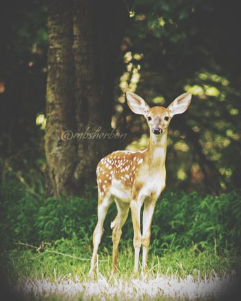 Tennessee Explore Nature Hiking Mountains Deer Animals On The Road Serendipity Nashville