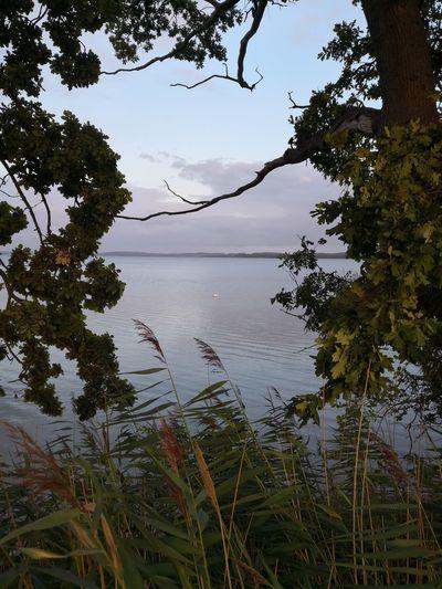 Fargau Tree Water Lake Sky