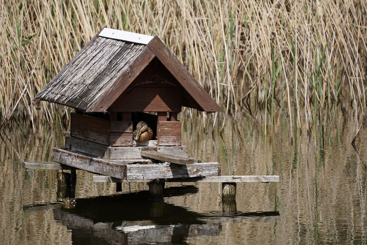 Duck in birdhouse over lake on sunny day